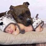 bimbo-dorme-con-il-cane